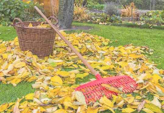 Уборка листьев в Екатеринбурге цена от 689 руб.