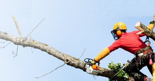 Спил деревьев в Екатеринбурге цена от 585 руб.